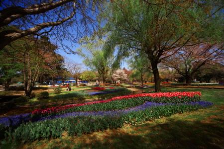 今日は昭和記念公園に行って来ました_a0027275_21322793.jpg