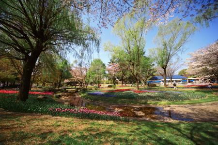 今日は昭和記念公園に行って来ました_a0027275_21332298.jpg