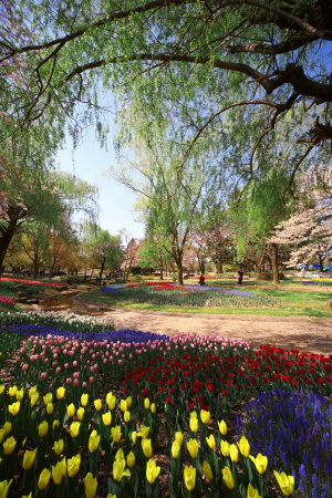 今日は昭和記念公園に行って来ました_a0027275_2133557.jpg