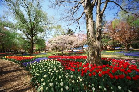 今日は昭和記念公園に行って来ました_a0027275_21342875.jpg