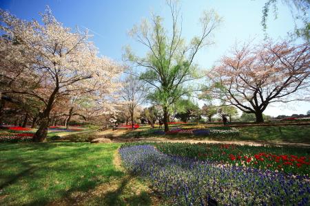 今日は昭和記念公園に行って来ました_a0027275_2135167.jpg