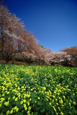 今日は昭和記念公園に行って来ました_a0027275_21354768.jpg