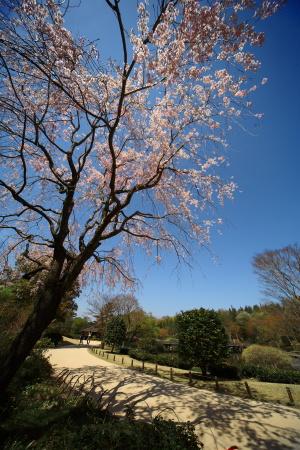 今日は昭和記念公園に行って来ました_a0027275_21362158.jpg