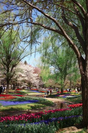 昭和記念公園の続き_a0027275_2142507.jpg