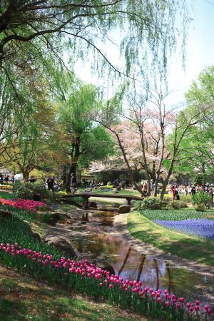 昭和記念公園の続き_a0027275_21434955.jpg