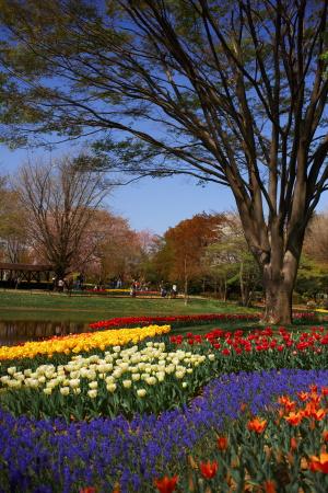 昭和記念公園の続き_a0027275_21454548.jpg