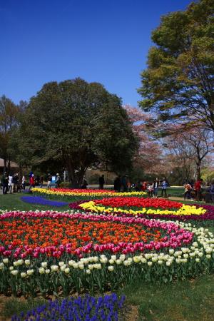 昭和記念公園の続き_a0027275_21463184.jpg