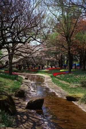昭和記念公園の続き_a0027275_21473220.jpg