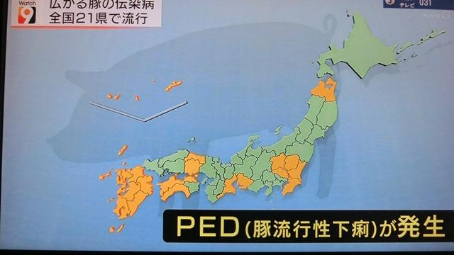 熊本県多良木町で鳥インフルエンザが発生、子豚の赤ちゃんが病原菌PDEに襲われる、STAP細胞に期待_d0181492_18223156.jpg