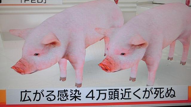 熊本県多良木町で鳥インフルエンザが発生、子豚の赤ちゃんが病原菌PDEに襲われる、STAP細胞に期待_d0181492_1822582.jpg