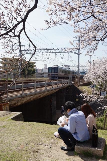 小保方晴子さんに見せたい夙川公園の桜、宝塚歌劇100周年と桜、春爛漫美しい桜の名所夙川公園_d0181492_233471.jpg