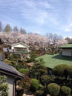 春♪♪_c0162404_12173559.jpg