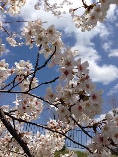 春♪♪_c0162404_12175864.jpg