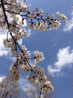 春♪♪_c0162404_12202832.jpg