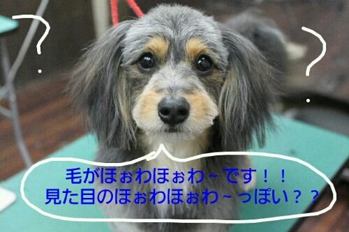 ペーパー_b0130018_016583.jpg