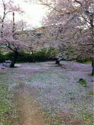 桜のある風景_c0060919_1992659.jpg
