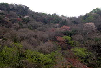 春の六甲山_e0103024_23584329.jpg