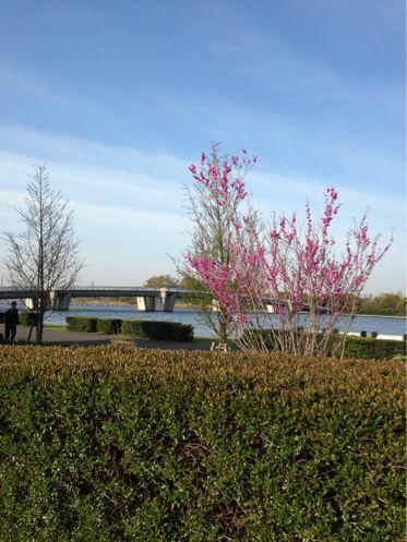 彩湖で初☆フルマラソン♪_b0203925_1425785.jpg