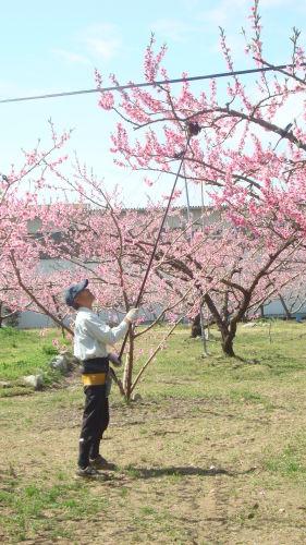 桃源郷は、花盛り_f0325525_22423576.jpg