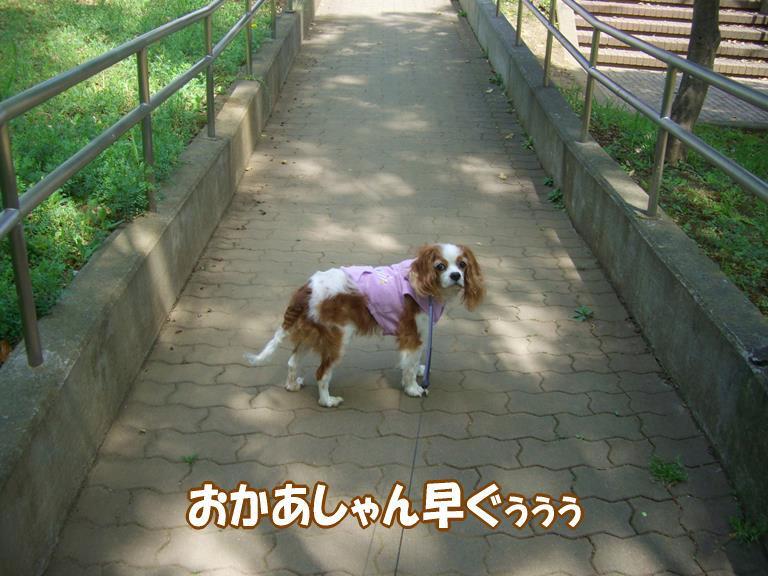 b0279153_2001484.jpg