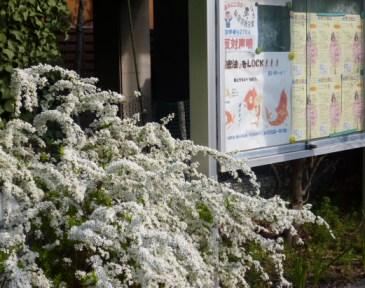 徳山ダム山林公有地化問題は終わっていない_f0197754_15394616.jpg