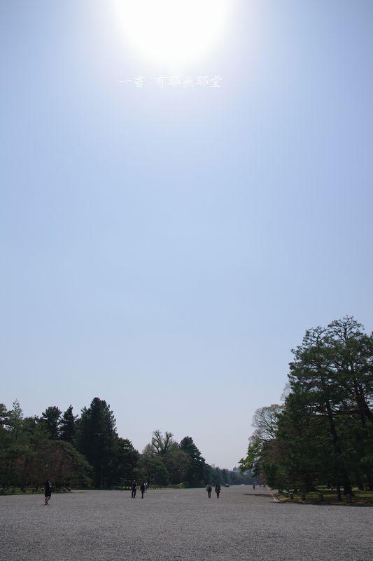 京都御苑・逞しい・桜_a0157263_01263407.jpg
