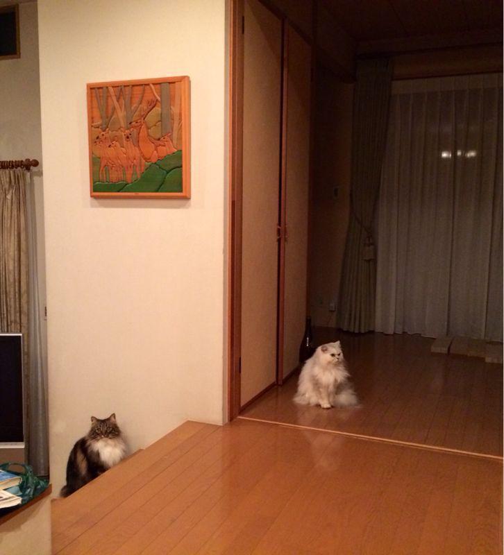 家餃子☆_c0151965_1142461.jpg