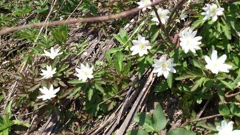 春の野の花と春のごはん。_d0182179_15343182.jpg