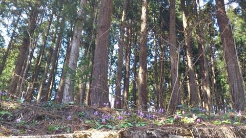 春の野の花と春のごはん。_d0182179_15351784.jpg