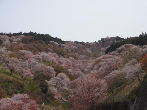 吉野へ行ってきました_e0201281_20571981.jpg