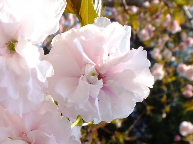 4月10日 三ッ池公園_e0145782_6111975.jpg
