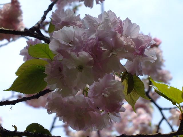 4月10日 三ッ池公園_e0145782_6115367.jpg