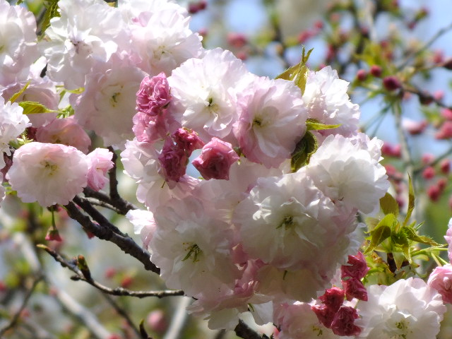 4月10日 三ッ池公園_e0145782_6123969.jpg