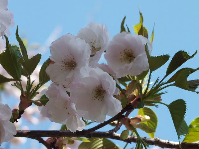 4月10日 三ッ池公園_e0145782_6134794.jpg