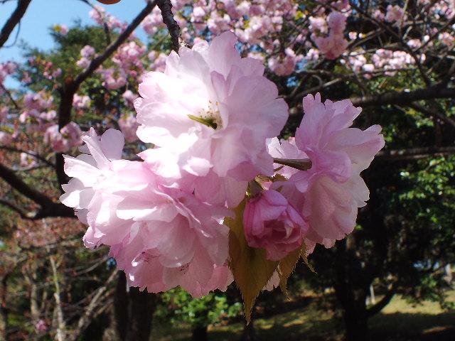 4月10日 三ッ池公園_e0145782_6141687.jpg