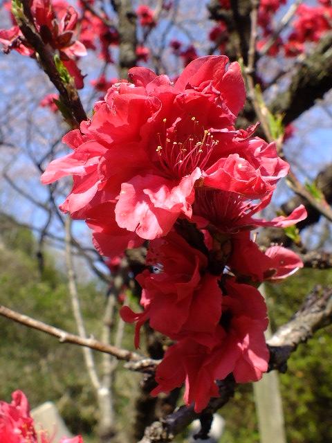 4月10日 三ッ池公園_e0145782_6145659.jpg