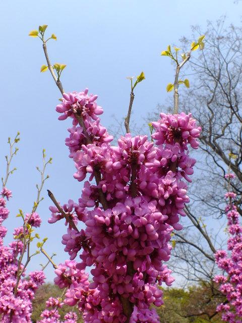 4月10日 三ッ池公園_e0145782_6161580.jpg