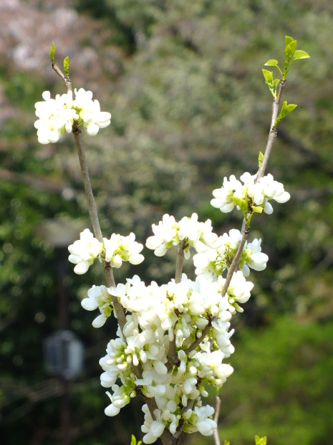 4月10日 三ッ池公園_e0145782_6164114.jpg