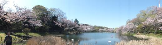 4月10日 三ッ池公園_e0145782_644423.jpg
