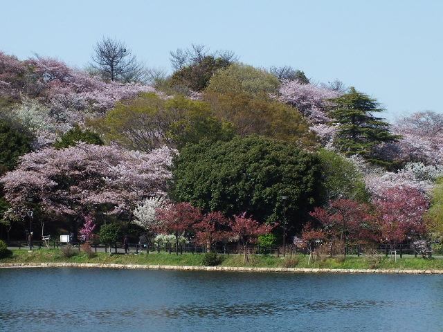 4月10日 三ッ池公園_e0145782_651454.jpg