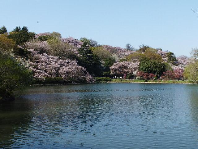 4月10日 三ッ池公園_e0145782_653989.jpg