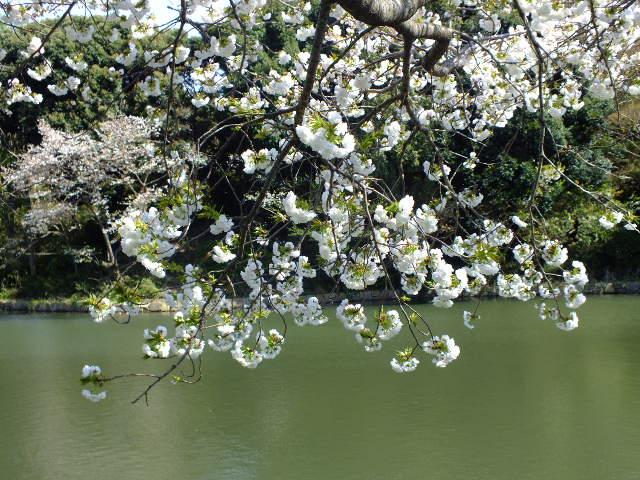 4月10日 三ッ池公園_e0145782_664247.jpg