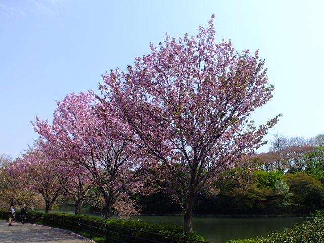 4月10日 三ッ池公園_e0145782_674861.jpg
