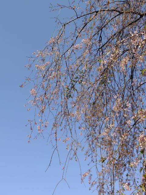 4月10日 三ッ池公園_e0145782_683889.jpg