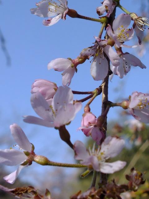 4月10日 三ッ池公園_e0145782_685854.jpg
