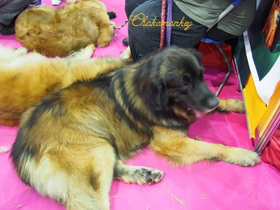 Discover Dogs_f0238789_20141326.jpg