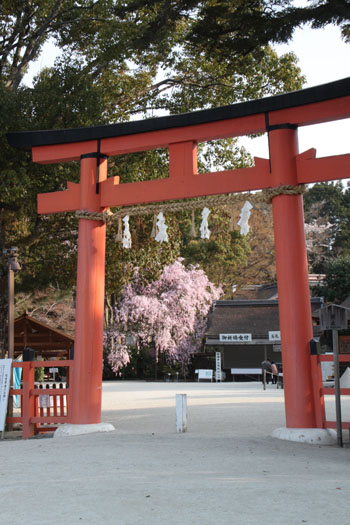2014花めぐり40 斉王桜_e0048413_19394777.jpg