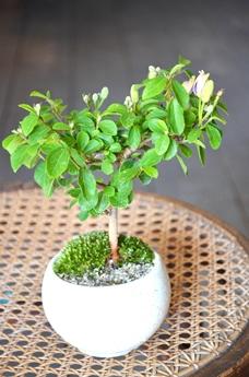 季節の盆栽仲間入り_d0263815_16121833.jpg