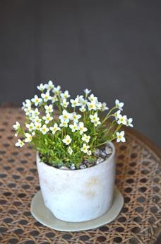 季節の盆栽仲間入り_d0263815_1622118.jpg