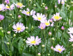 季節の盆栽仲間入り_d0263815_16422211.jpg